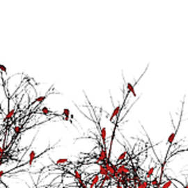 Susan Maxwell Schmidt - The Redbird Tree