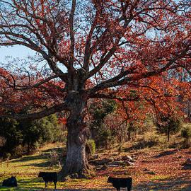 Karen Wiles - The Resting Tree