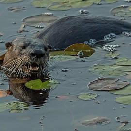 Steve Dunsford - The River Otter
