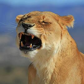 Donna Kennedy - The Roar