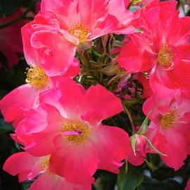 Dennis Reagan - The Rose Garden