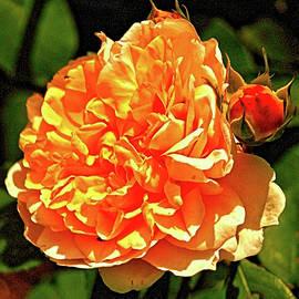 Richard Denyer - The Rose
