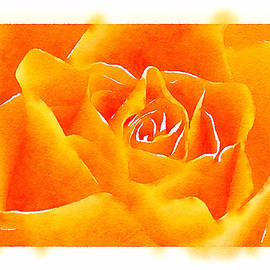 Tears of Colors Gallery - The Rose