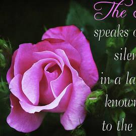 Trina Ansel - The Rose