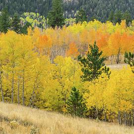 Bijan Pirnia - The Salient Lodestone Of Autumn