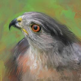 Jai Johnson - The Sharp Shinned Hawk