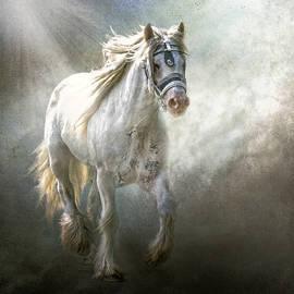 Brian Tarr - The Silver Cob
