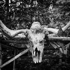 Jouko Lehto - The Skull