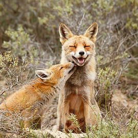 Roeselien Raimond - The Smiling Vixen and the Happy Kit
