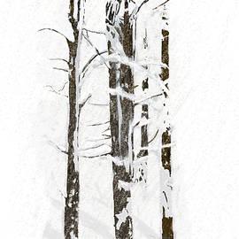 Angela A Stanton - The Snow Just Won
