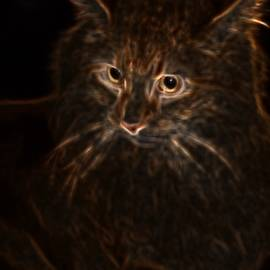 Maggie Vlazny - The Soul of a Cat