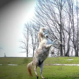 Patricia Keller - The Stallion Dancer