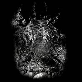Mark Andrew Thomas - The Swamp King