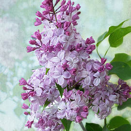 Barbara McMahon - The Sweetness of Lilac