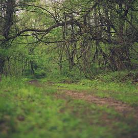 the taking tree - Shane Holsclaw