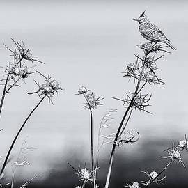 Liran Eisenberg - The Thorn