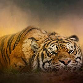 Jai Johnson - The Tiger Awakens