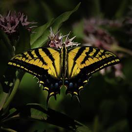 Ernie Echols - The Tiger Swallowtail