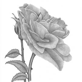 Patricia Hiltz - The Timeless Beauty of Roses