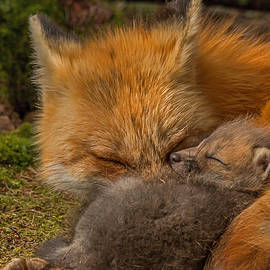 Steve Dunsford - The Tired Foxes
