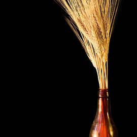 JC Findley - The Vase