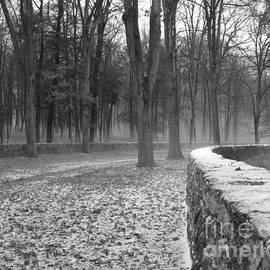 Marcel  J Goetz  Sr - The Wall And The Woods
