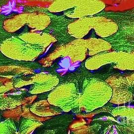 Sara Adams - The Waterlilies of Edinboro Lake no. 5