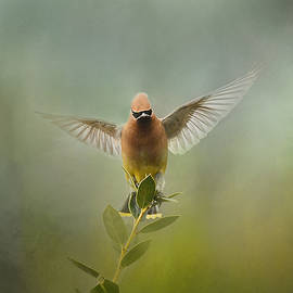 Jai Johnson - The Waxwing Welcomes Spring