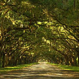 Reid Callaway - The Way Home Wormsloe Plantation Live Oak Tree Art
