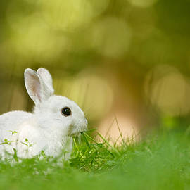 Roeselien Raimond - The White Rabbit