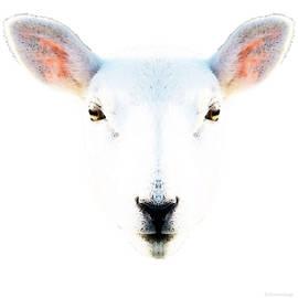 Sharon Cummings - The White Sheep By Sharon Cummings