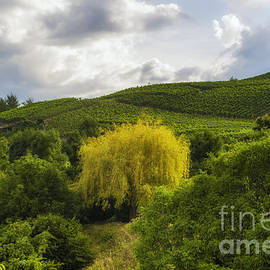 Michelle Meenawong - the wineyards of Loc