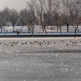 Olimpia Negura - The winter on the lake