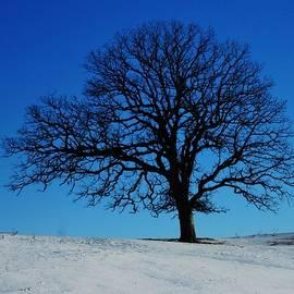 Lori Frisch - The Winter Tree