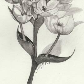 Wraymona Low - The Wonder Flower
