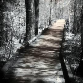 Marcia Lee Jones - The Woods Of Wonder