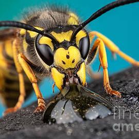 Marco Fischer - Thirsty Wasp