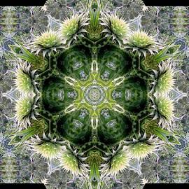 Maria Urso  - Thistle Wreath