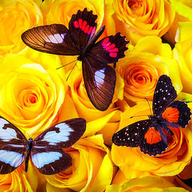 Three Butterflies On Yellow Roses - Garry Gay