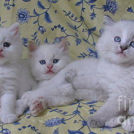 Pamela Benham - Three Little Kittens SilkTapestryKittensTM