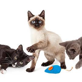 Three Playful Kittens on White - Susan Schmitz