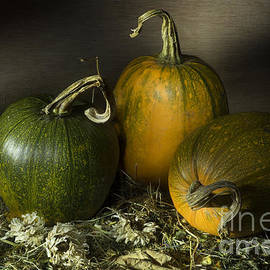Ann Garrett - Three Pumpkins and Dried Daisies