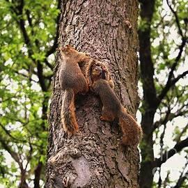 Three Squirrel Amigos