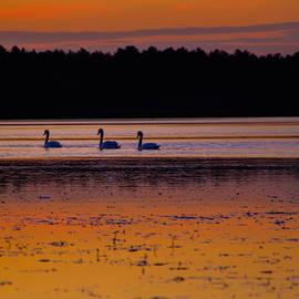 Linda Howes - Three Swans Swimming