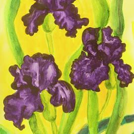 Irina Afonskaya - Three violet irises, watercolor