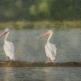 Patti Deters - Three White Pelicans