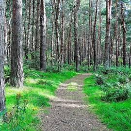 Paul Stout - Through the Woods