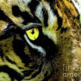 rdm-Margaux Dreamations - Tiger Eye