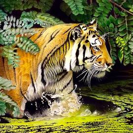 David Hoque - Tiger in the swamp