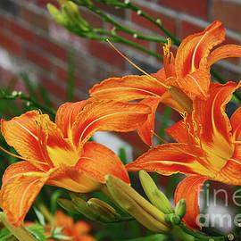 Deborah Bowie - Tiger Lilies